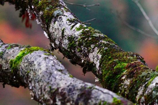 樹皮と苔の明暗がきれい